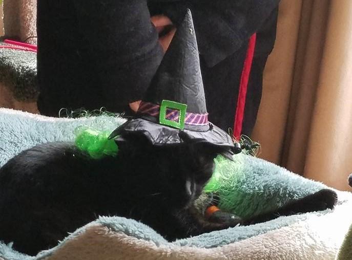 jinx-witch